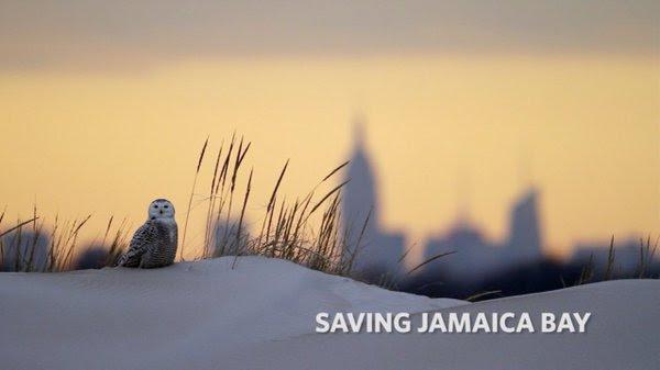 Saving_Jamaica_Bay